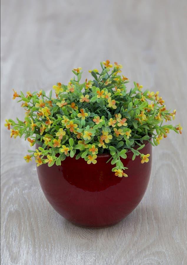 花瓶花 库存照片