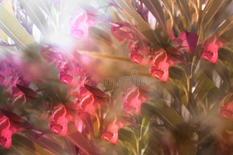 花的抽象图象在公园 皇族释放例证