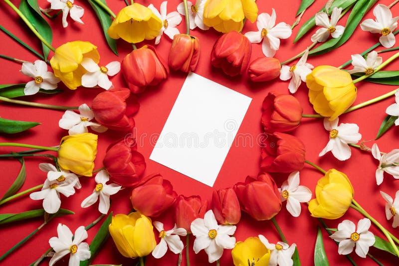 花的构成 红色郁金香花框架以圈子,顶视图的形式 免版税库存照片