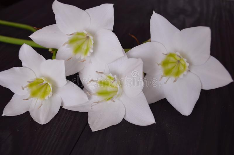 花的构成 库存照片