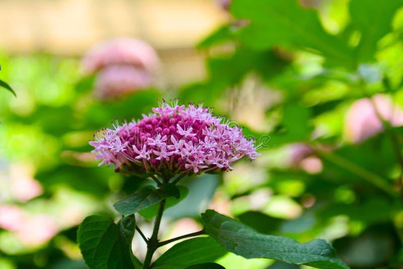 从花的桃红色篮子在庭院里 免版税库存图片