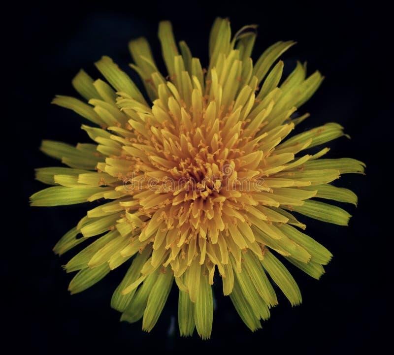 花的植物群宏观射击  免版税库存图片