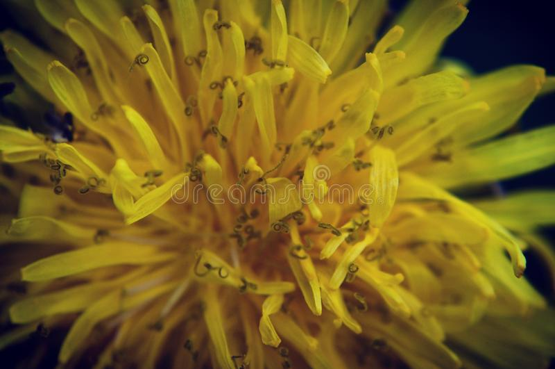 花的植物群宏观射击  免版税库存照片