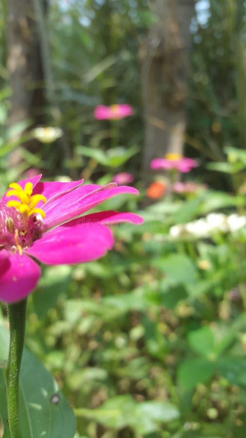 花的自然装饰给休息眼皮&头脑 库存照片