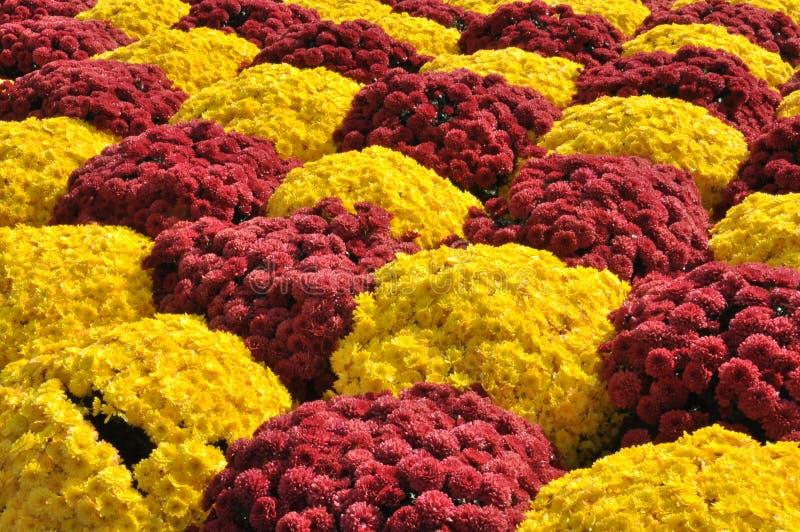 花的触击的颜色 库存照片