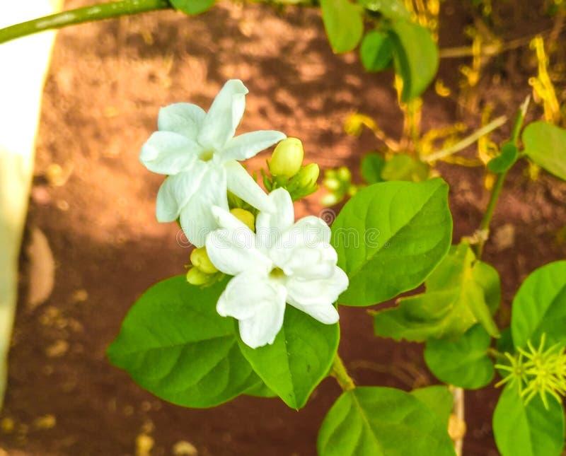 花的这棵美丽的树爱的我的家 免版税库存照片