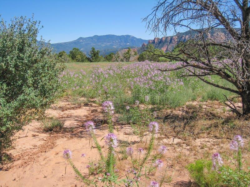 花的领域在峡谷的为度假区装边 免版税库存图片