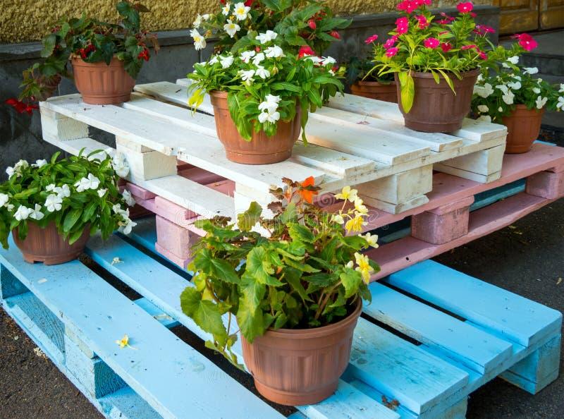 花盆在不同颜色绘的木板台站立 库存照片