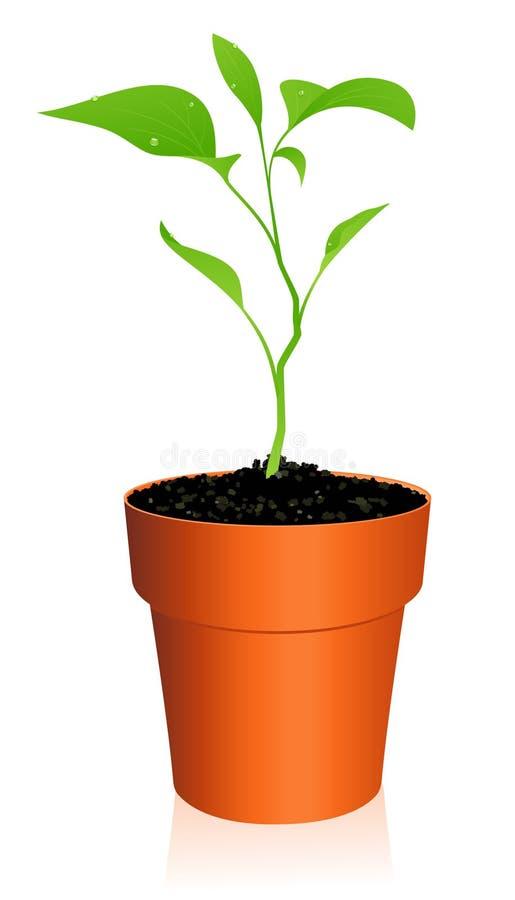 花盆新芽 向量例证