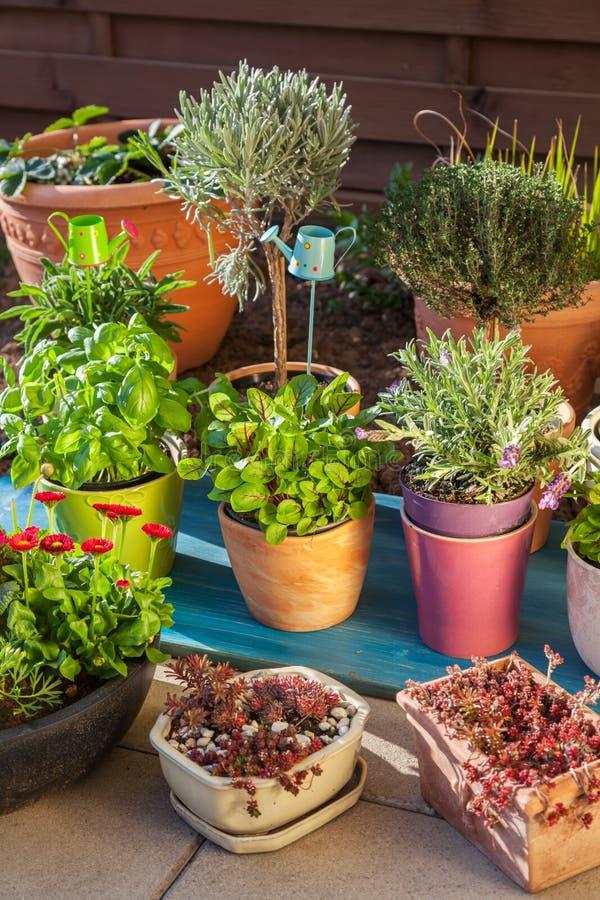 花盆的变异用草本和其他植物 库存图片