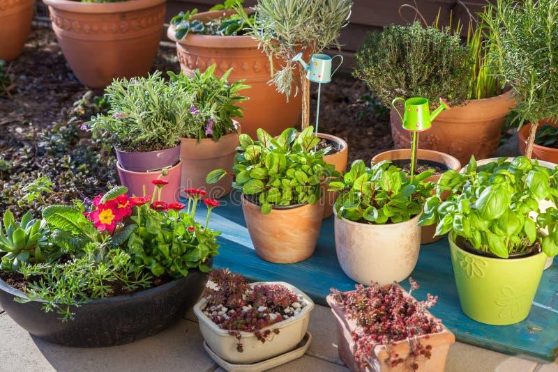 花盆的变异用草本和其他植物 免版税库存照片