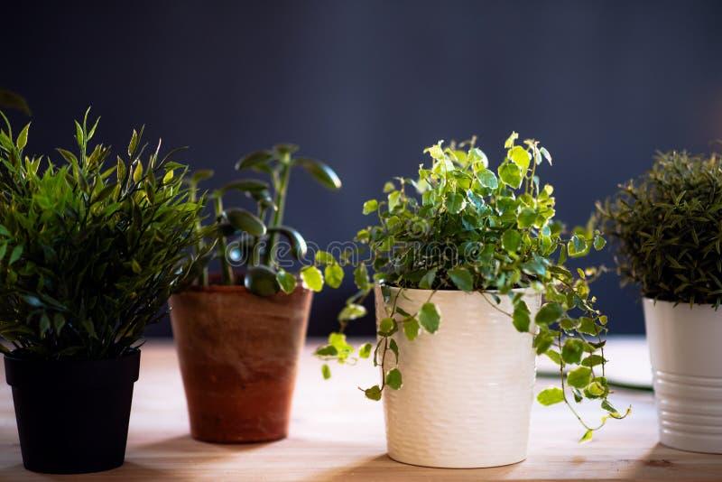 花盆的植物在反对黑暗的背景的书桌上 卖花人事务起动  免版税库存照片