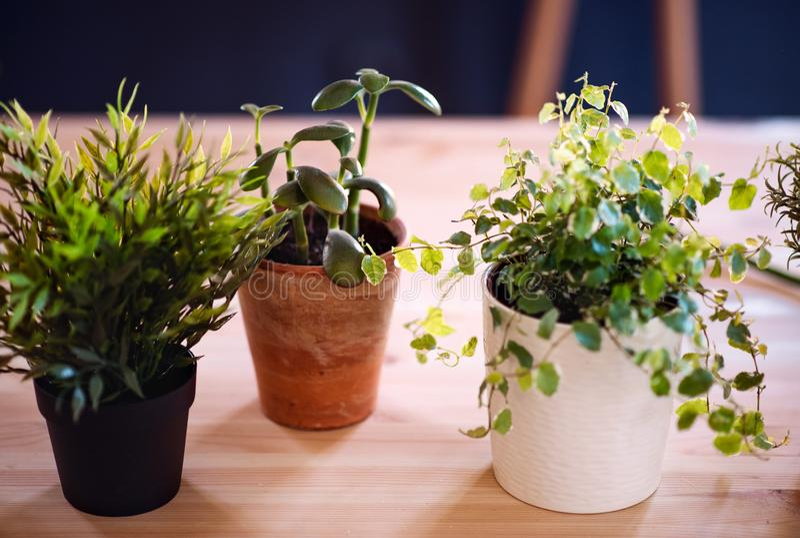 花盆的植物在反对黑暗的背景的书桌上 卖花人事务起动  库存照片