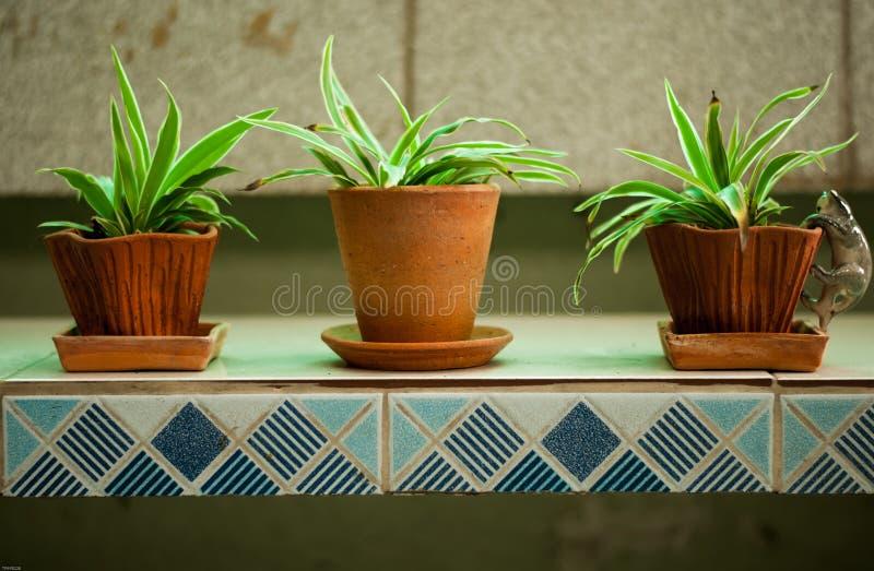Download 花盆的植物 库存照片. 图片 包括有 夏天, 背包, beautifuler, 新鲜, 绿色, 生长, 樱草属 - 72357884