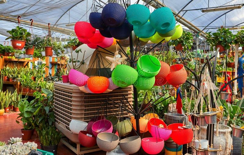 花盆自温室在冬天 图库摄影