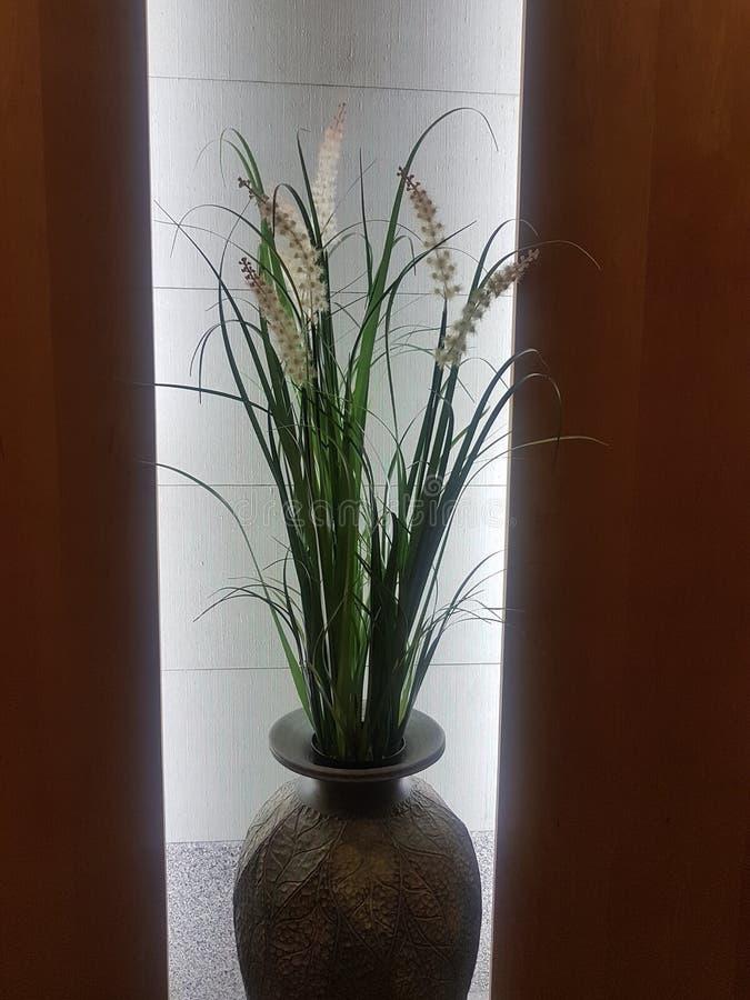 花盆 免版税图库摄影