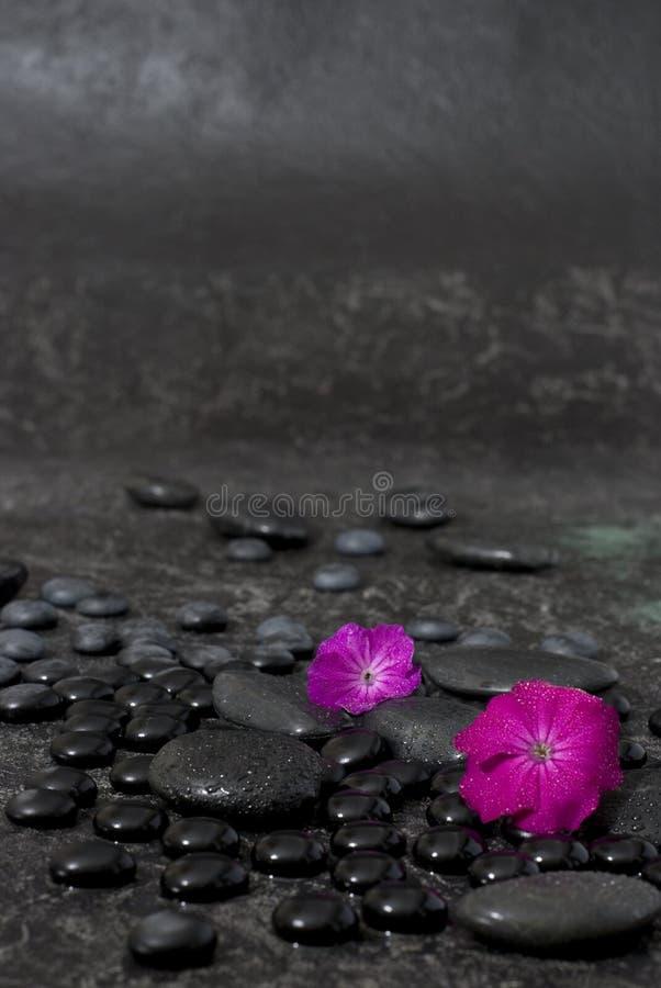 花粉红色 图库摄影