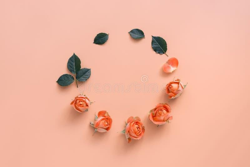 花结构、圆的框架的玫瑰精美珊瑚头和在粉红彩笔背景的绿色叶子 平的位置,顶视图 库存照片