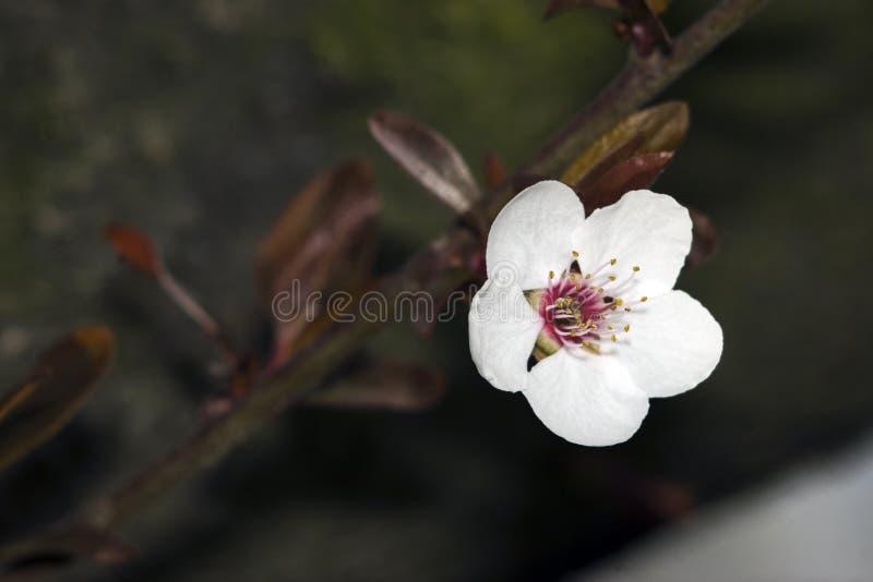 花结构树白色 库存图片