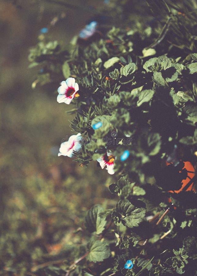 花绽放在庭院里 免版税图库摄影