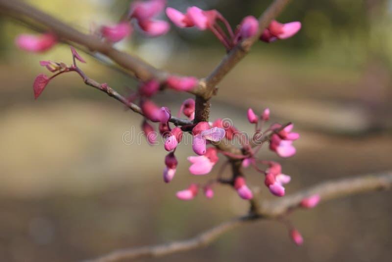 花绽放在春天 库存照片