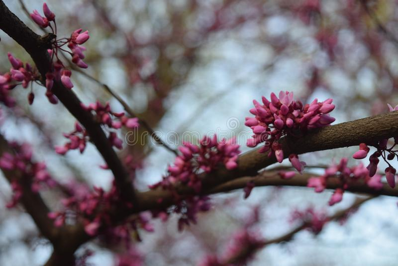 花绽放在春天 库存图片