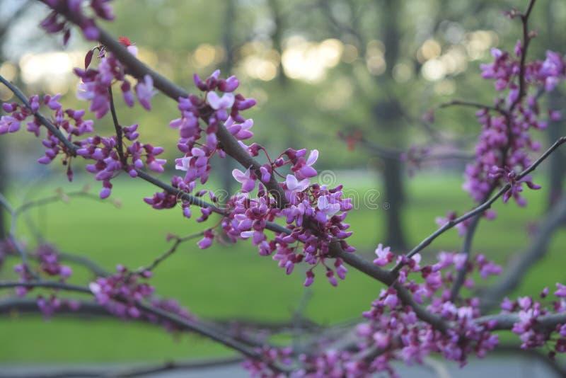 花绽放在春天 免版税库存照片