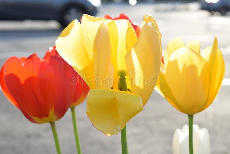 花绽放在春天 免版税图库摄影