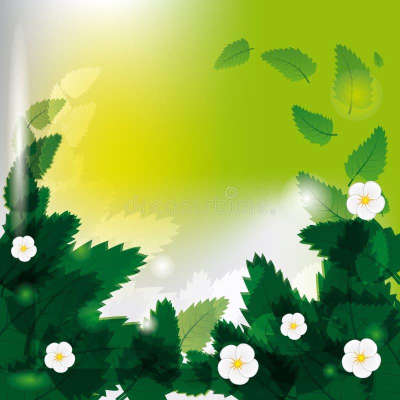 花绿色叶子 免版税图库摄影