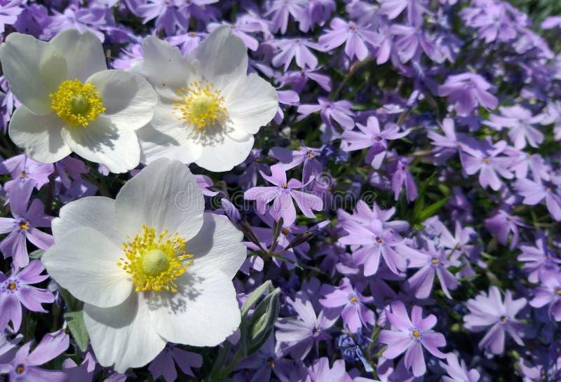 花背景在庭院里 免版税库存图片