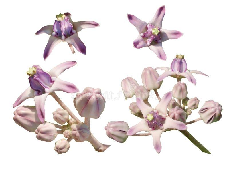 花背景自然beautifil颜色 免版税库存照片