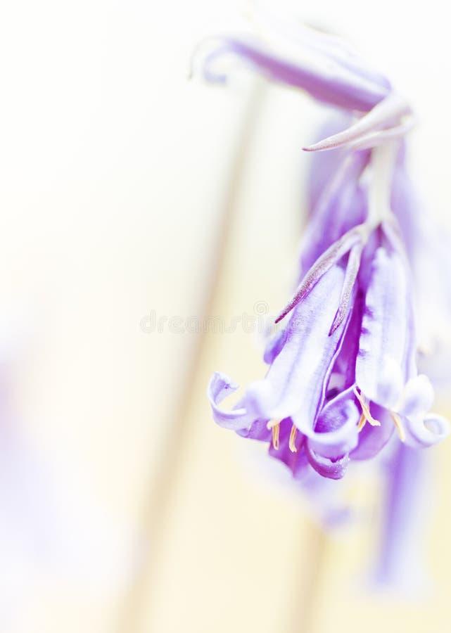 花背景-晴朗的草甸有与迷离的花背景- bokeh 库存图片