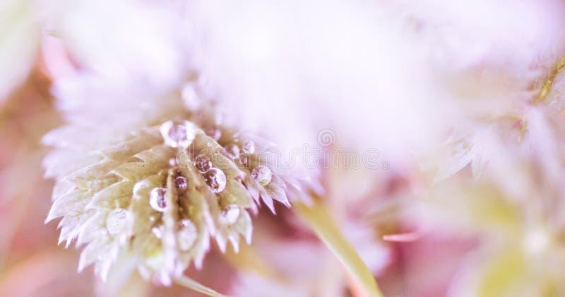 花背景-晴朗的草甸有与迷离的花背景- bokeh 免版税库存图片
