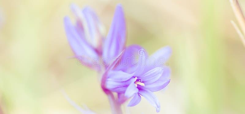 花背景-晴朗的草甸有与迷离的花背景- bokeh 免版税图库摄影
