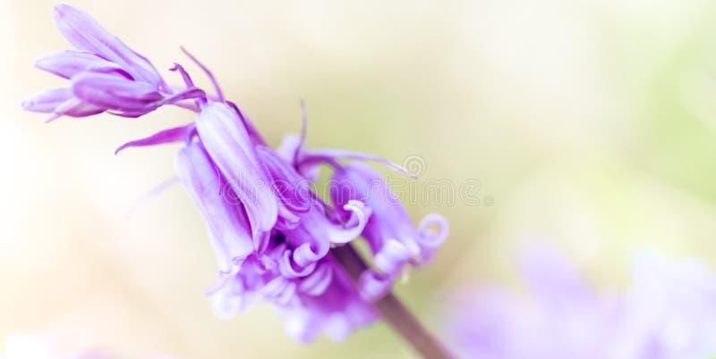 花背景-晴朗的草甸有与迷离的花背景- bokeh 免版税库存照片