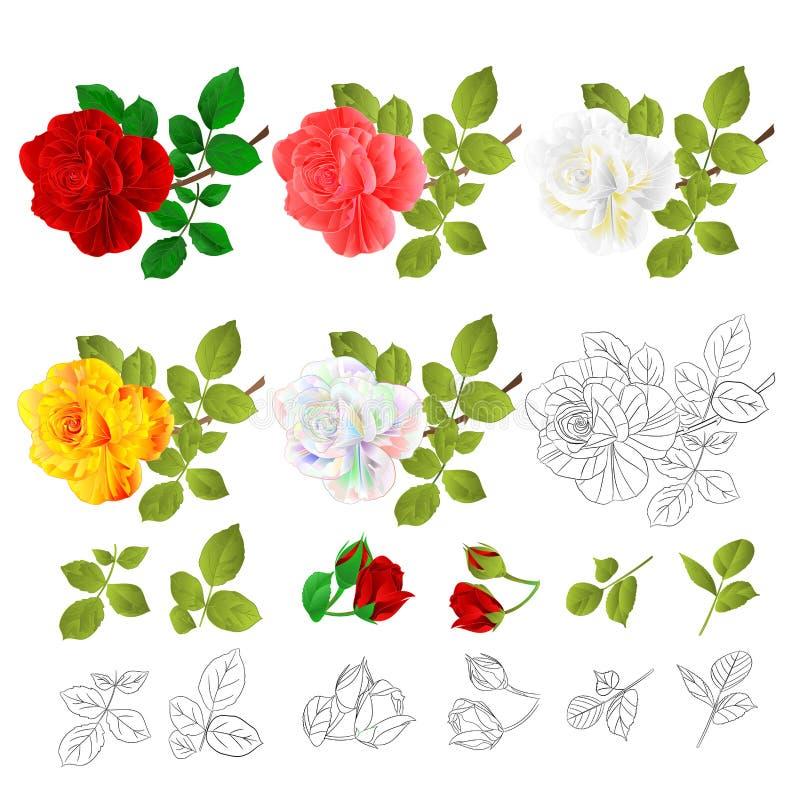 花自然各种各样的红色桃红色白色黄色玫瑰和的叶子和概述在一个白色背景传染媒介例证的葡萄酒编辑 库存例证