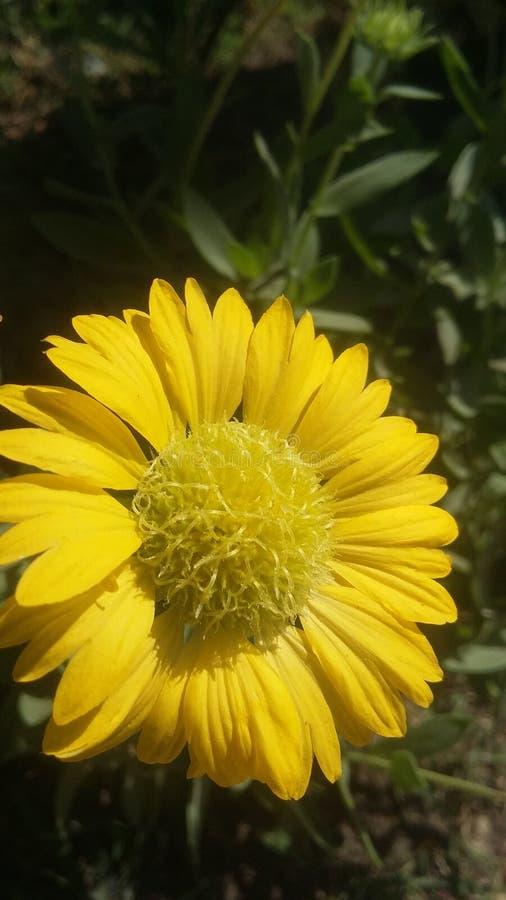 花自然流动点击5 mp 库存照片