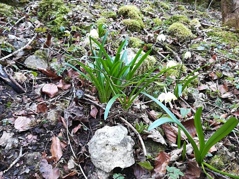 花自然精密美好的春天 库存照片