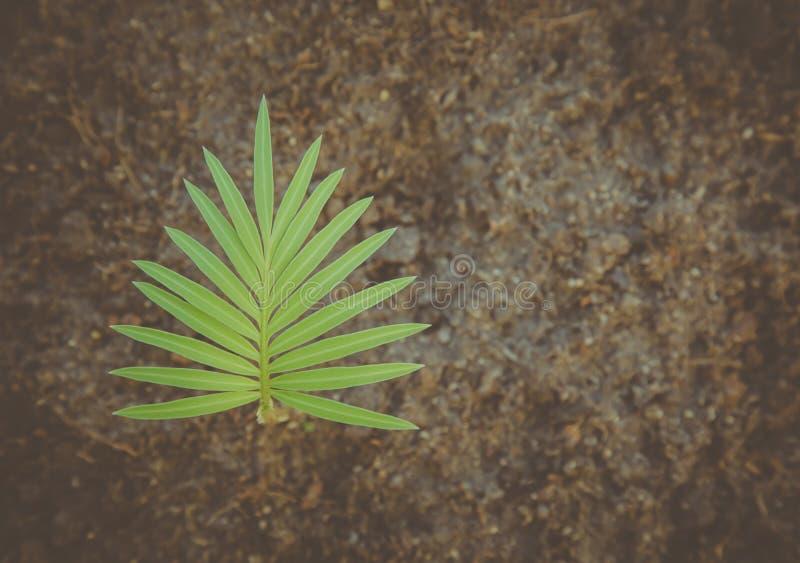 花艺术,棕榈树的变动 免版税库存图片