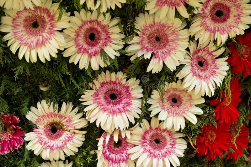 花节日在丰沙尔 图库摄影