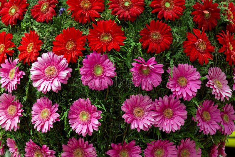 花节日在丰沙尔 免版税库存照片