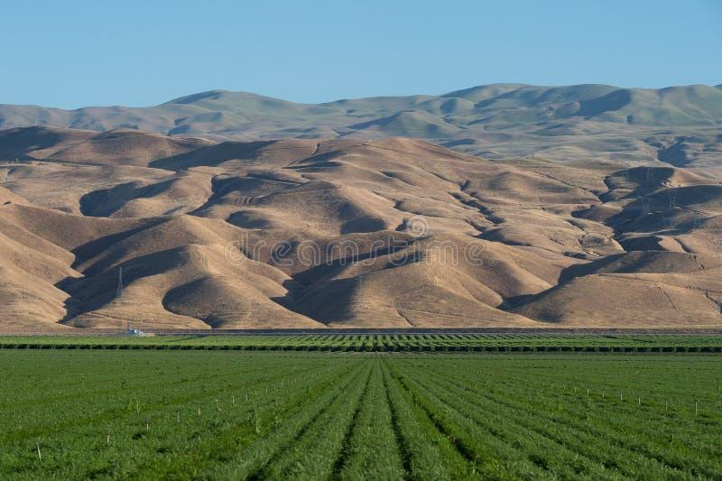 紫花苜蓿农田和山在南加州 图库摄影