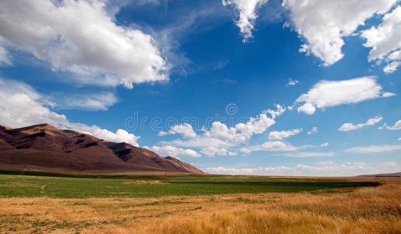 紫花苜蓿种秣草地和麦田在积云下在怀俄明 库存照片