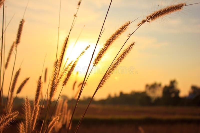 Download 花草 库存图片. 图片 包括有 种子, 田园诗, 本质, 吸引力, 天空, 横向, 棕褐色, 五颜六色, 工厂 - 59111817