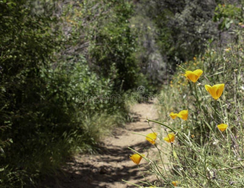 花菱草一条供徒步旅行的小道 免版税库存图片