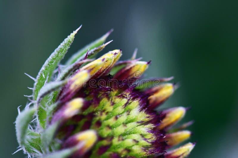 花蕾在五颜六色的庭院里迷人和 免版税库存照片