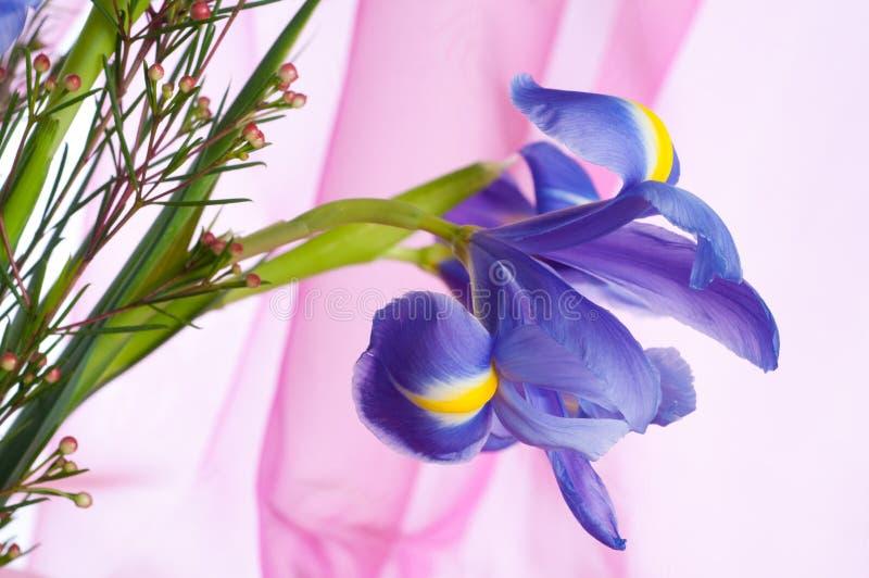 花虹膜紫色春天 免版税库存照片