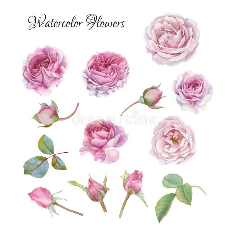 花被设置水彩玫瑰和叶子 库存例证