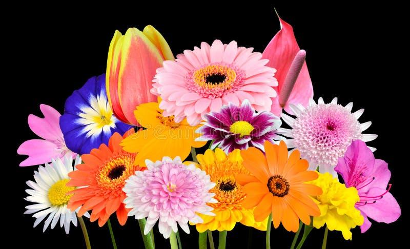 花被隔绝的各种各样的五颜六色的花的花束汇集 库存图片