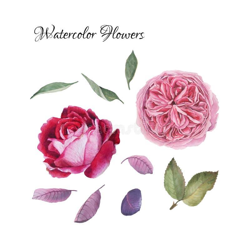 花设置了手拉的水彩牡丹,玫瑰 库存例证